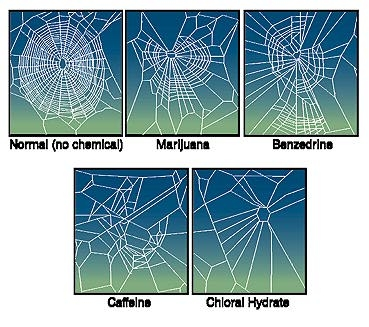 Frankly, all this proves is that spiders aren't people.