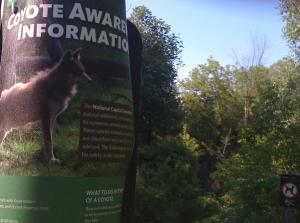 Coyote Awareness