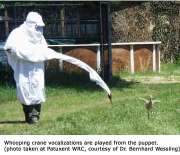 Whooping Crane Feeding Outfit