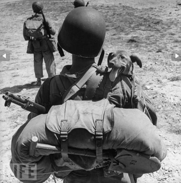 LIFE War Dog