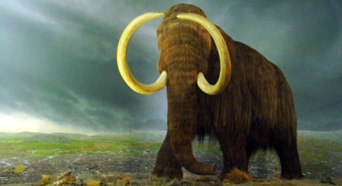 Wooly Mammoth image found at http://gliving.com/mammoths-driven-to-extinction-by-humans/