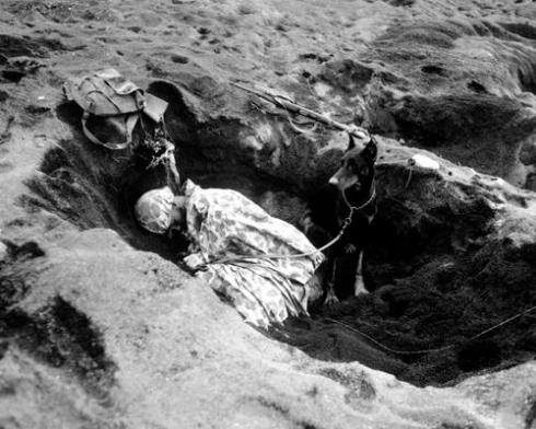 Pfc. Rez P. Hester, 7th War Dog Platoon, 25th Regt., takes a nap while Butch, his war dog, stands guard.  Iwo Jima, February 1945.  S.Sgt. M. Kauffman.