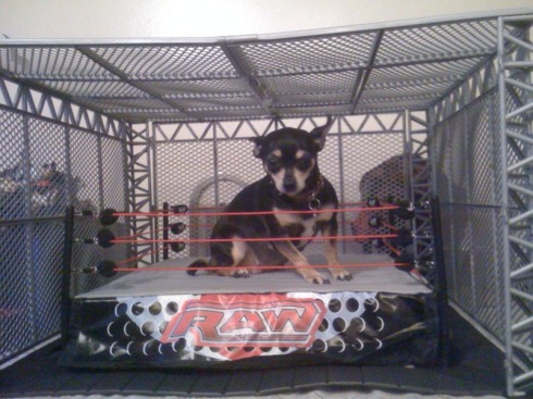 Dog in a wrestling ring