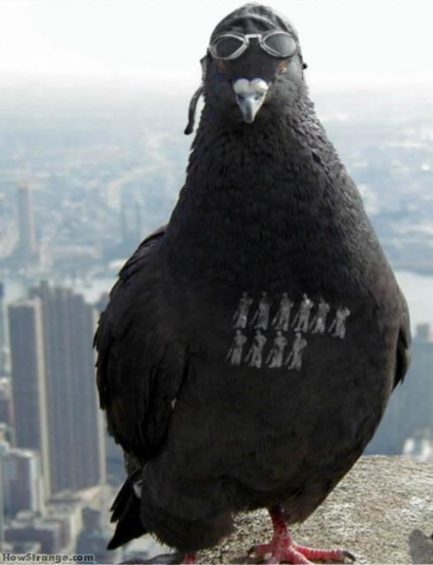 Pigeon Pilot