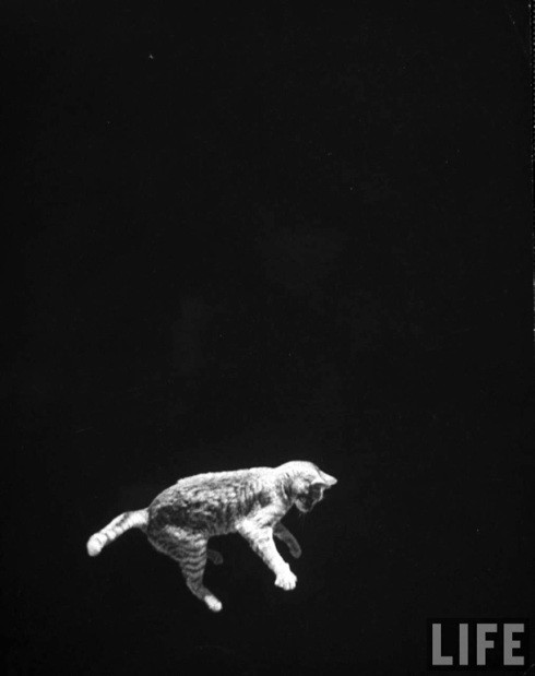 A cat being dropped upside down to demonstrate how a cat's movements while falling can be imitated by astronauts in space.