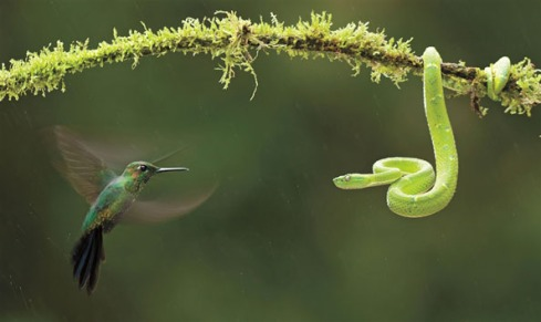 Hummingbird vs Pit Viper from http://cubeme.com